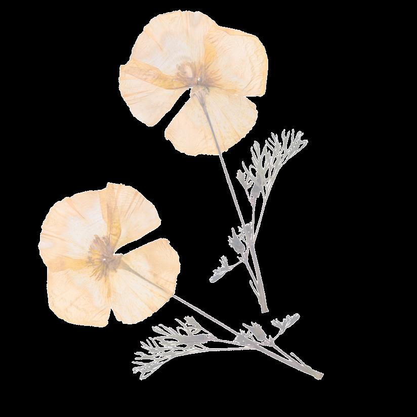 Flower Accent 1
