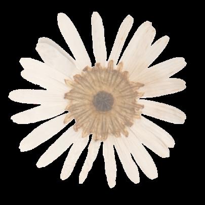 Flower Accent 2