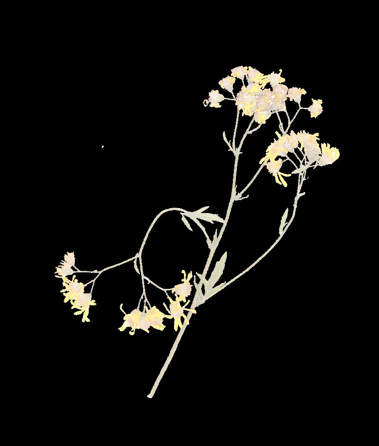 Flower Accent 4